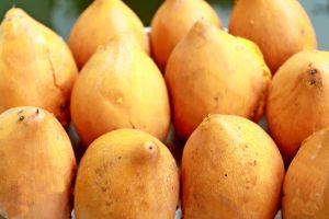 indonesia sawo fruit sawo dutch unique tropical rare fruit kupang picture