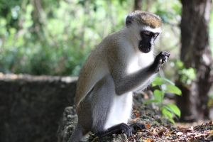 interest animal forest monkey animal photography baby monkey