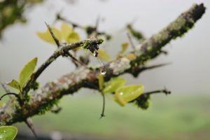 jungle nature vsco nikon outdoor dewdrops plants drops mother nature droplet