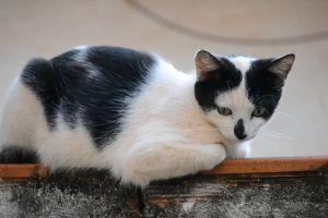 kitty feline animal sit tabby cat wall