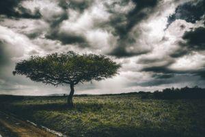 landscape adventure wanderlust outdoor photography sky wildlife africa