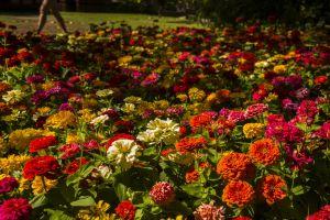 landscape flowers season fresh blue outdoor green beautiful scene farm