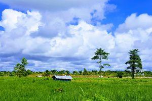 landscape growth green cars grass clouds crops farm road field