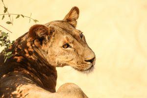 landscape sky wildlife africa outdoor adventure wanderlust photography