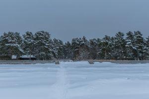 landscape trees winter snow ice