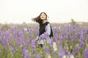 lavender (flower) landscape flora floral flowers lavender color herbs farmland country field