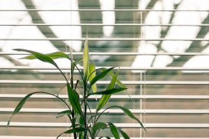 leave light growth color window blinds green indoors modern plant blinds