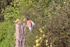 log bullfinch animal perched daytime flowers grass