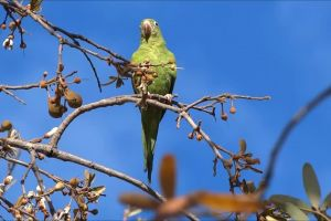 low angle shot tree perched green parakeet parrot branches