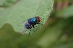 macro photography invertebrate macro nature insect pest flying