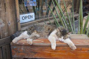 moggy sleeping cactus aloe vera cat cute fluffy mucky