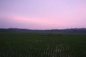 natural kerala sunset outdoorchallenge farming