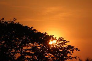 nature backlit sky sun dawn sunset sunrise tree
