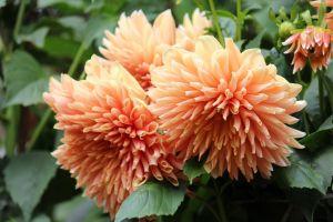 nature beautiful photography flower flora beautiful flowers