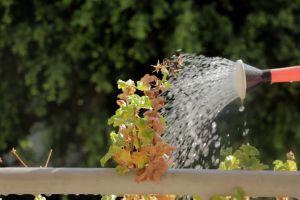 nature daylight water garden plants watering sunny