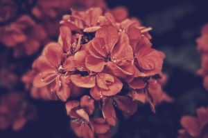 nature flower garden flower