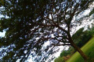 nature green calm peace spiritual