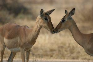 nature impala nature park