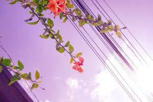 nature minimalism mobilechallenge flowers