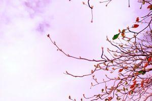 nature minimalism trees
