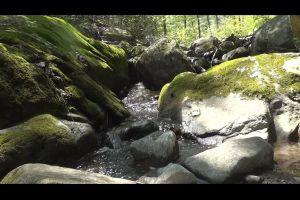 nature rocks water stream