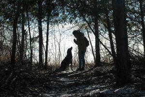 nature trails adventure dog