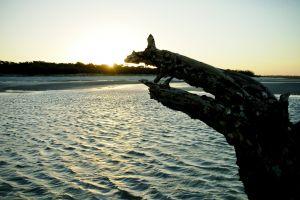 ocean coast driftwood beach