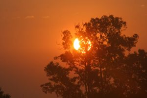 orange sky bright glowing tree behind glow bright day sunrise summer vibes hot