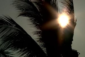 palm trees sun vacation sunny holiday windy