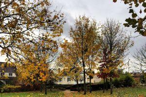 paris colors nature