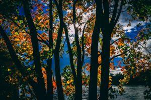 park color bright colours foliage trees environment dawn growth season sun