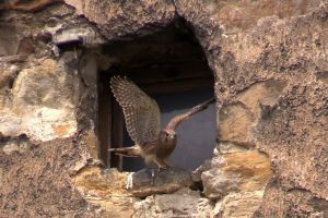 perched windowpane animal