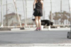 pet blur matrix owner dog person playful domestic mammal cute