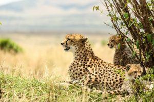 photography wildlife outdoor adventure sky landscape wanderlust africa