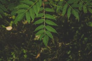 plant nature green growth