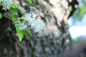 plants daytime branch tree blur windy flower