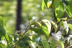 plants daytime sunlight green nature wind