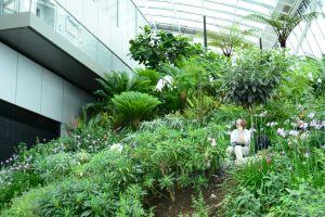 plants flowers rooftop green indoor sky garden london united kingdom
