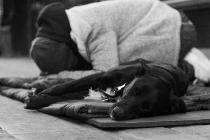 poor rest street homeless emotional sadness black and white dog sad woman