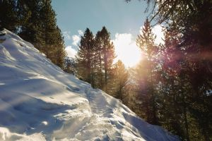 powder skiing sun flare trees free gold snow