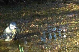 puddle grass water animal splash daytime