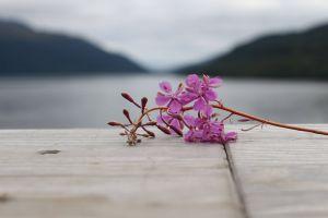 purple flower pink flower nature mountains flower