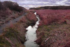 purple heather grass path