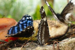 rock ground colorful insects daytime butterflies colourful wings