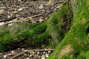 root tree moss