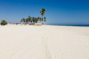 salalah palm trees beach