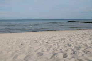 sand-beach sea baltic sea seagull sky