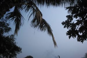 santipur sky india coconut village