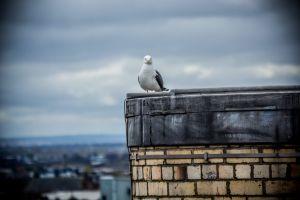 scottish epic cool seagull awesome animal scotland