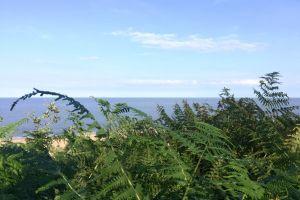 sea beach cliffside ocean foliage